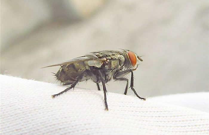 <b>灭苍蝇服务</b>