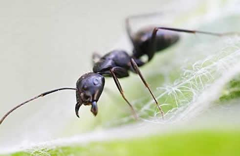 <b>灭蚂蚁服务</b>