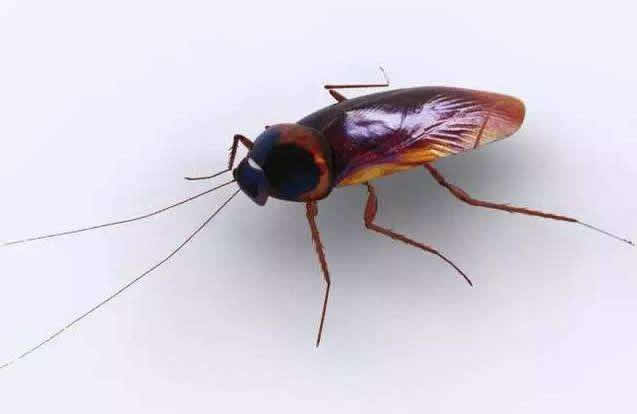 <b>灭蟑螂服务</b>