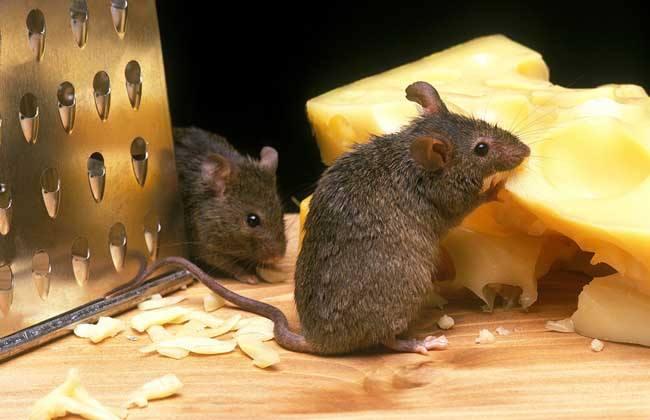 <b>灭老鼠服务</b>