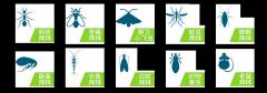 杭州上城区灭白蚁